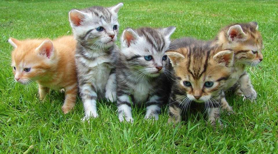 Katzenfutter testen - Pixabay